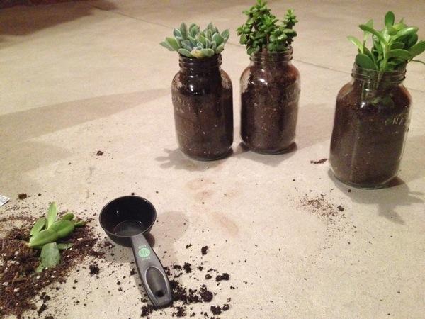 Mason Jar Planters Picture 4